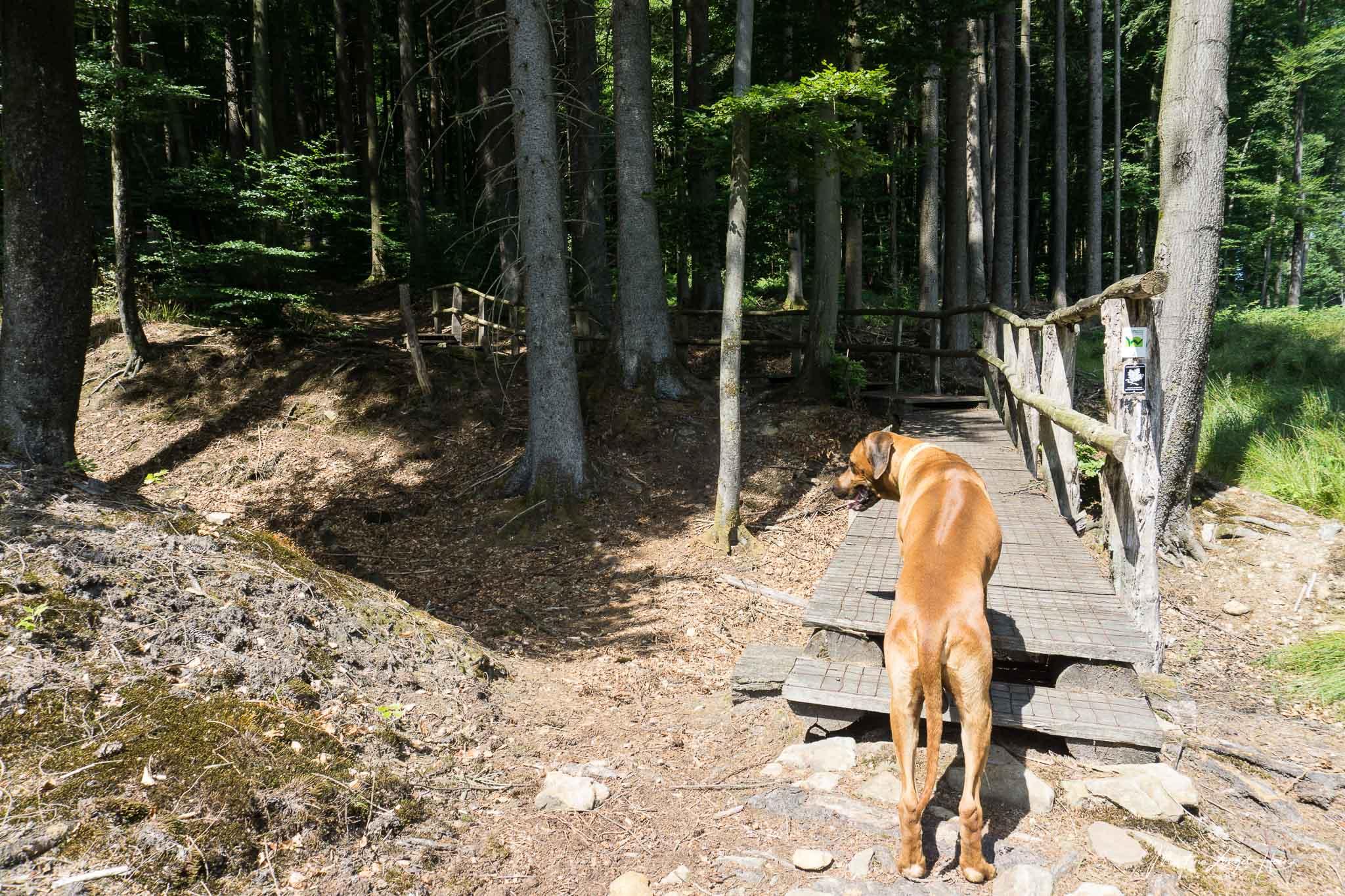 Holzwege führen uns durch den Wald nach oben