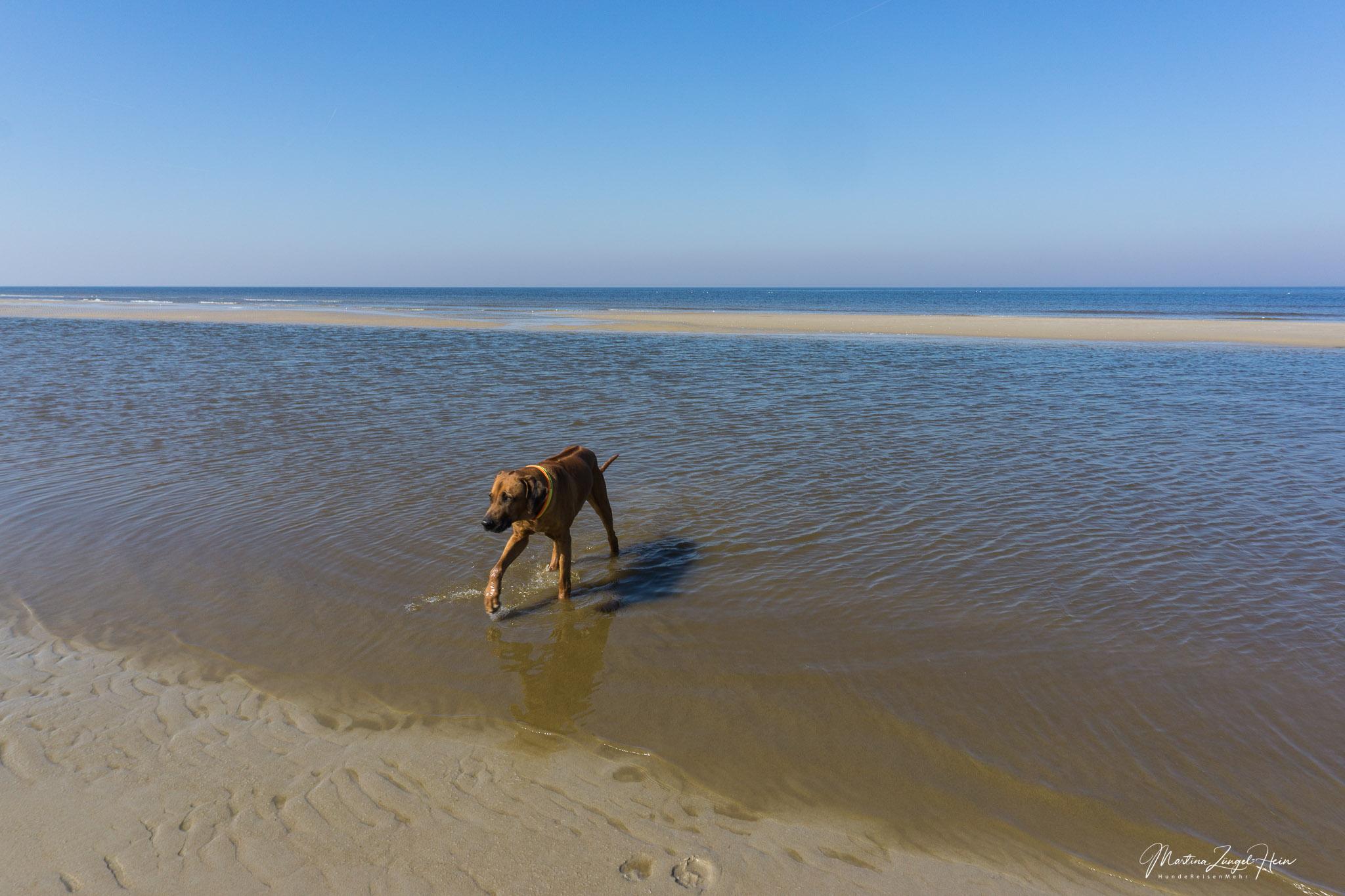 Am Strand vor De Slufter macht Dayo einen Ausflug in die Nordsee