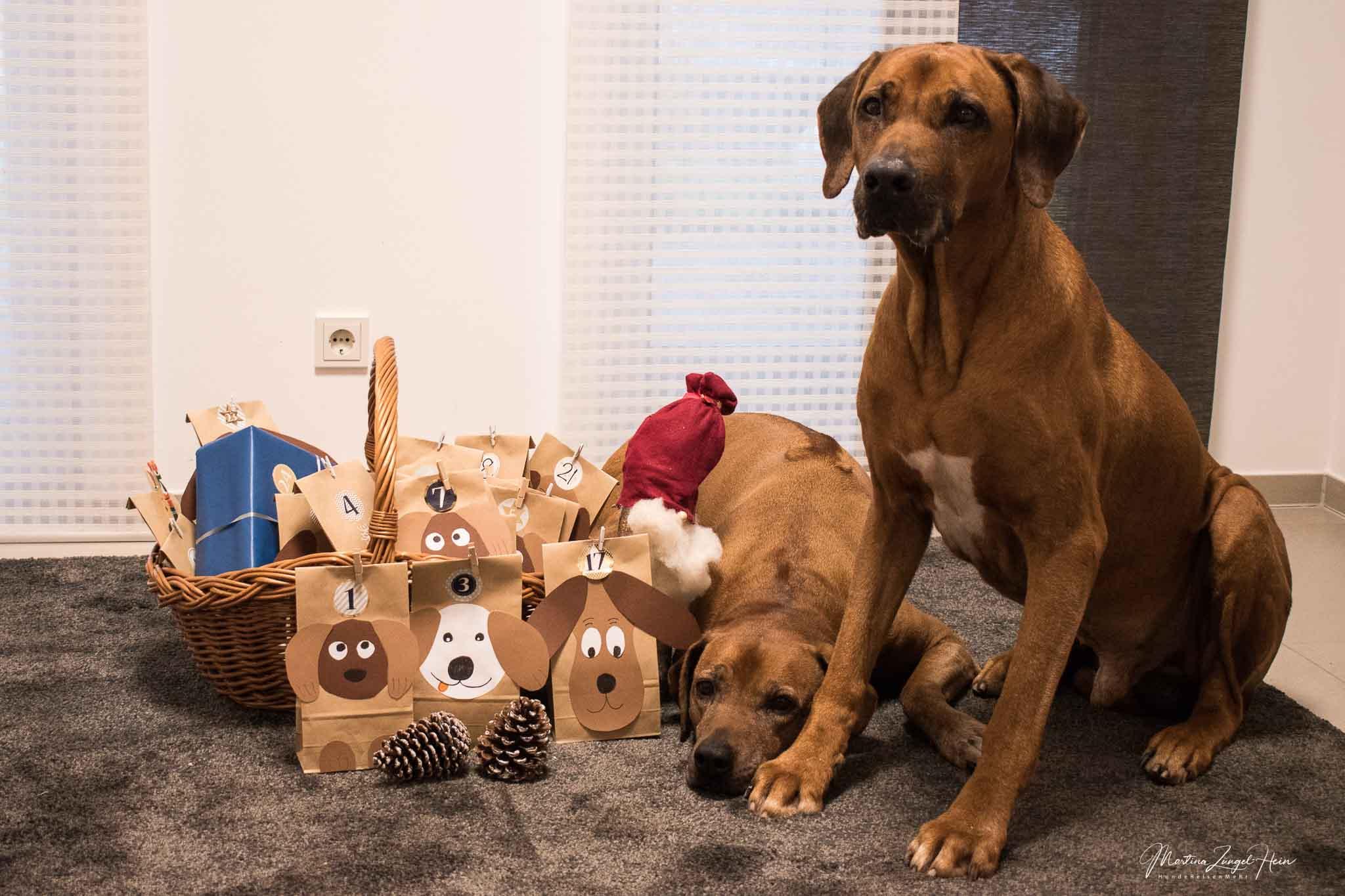 Selber machen - Adventskalender für Hunde