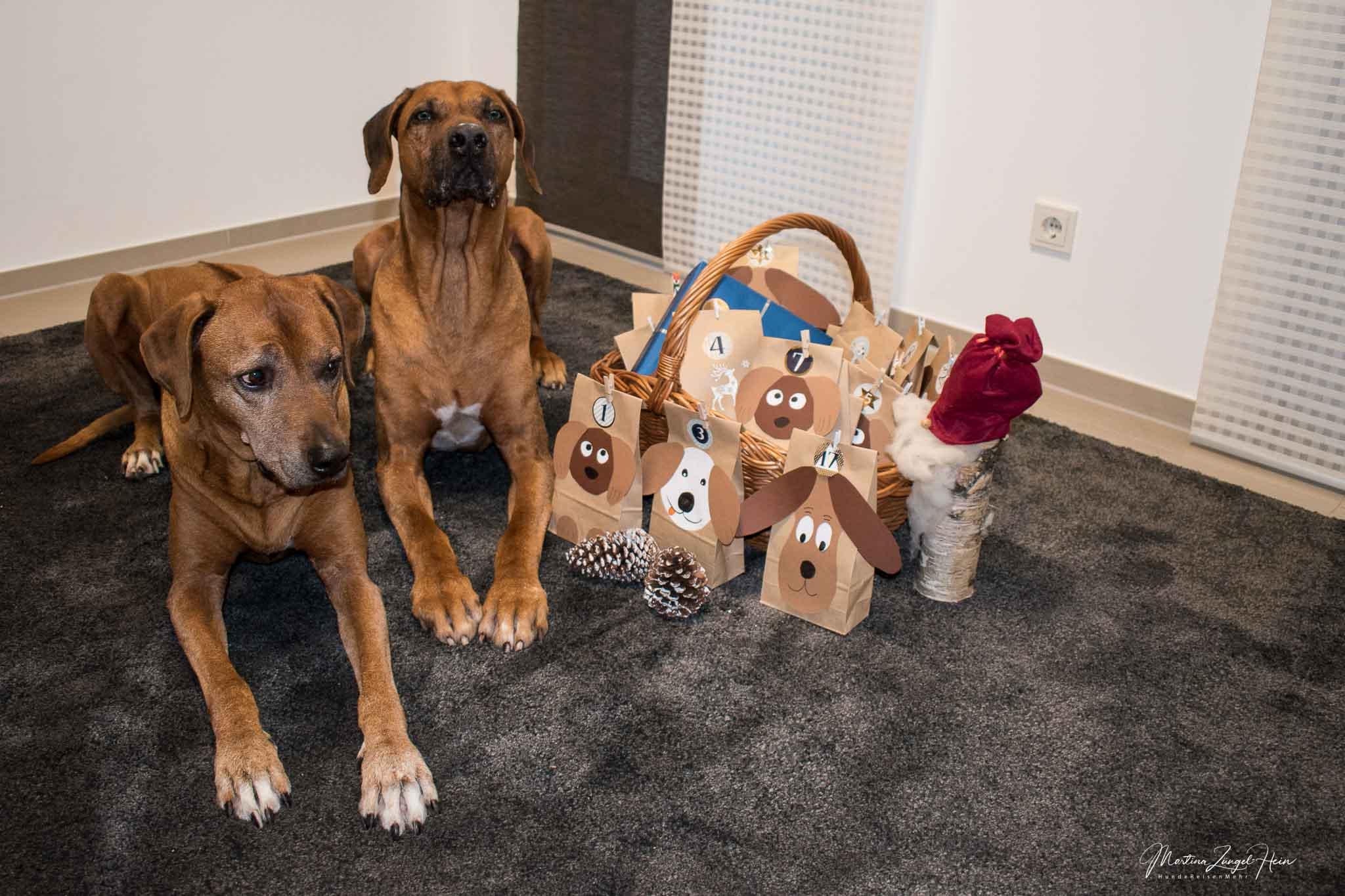 Selbstgebastelt - Adventskalender für Hunde