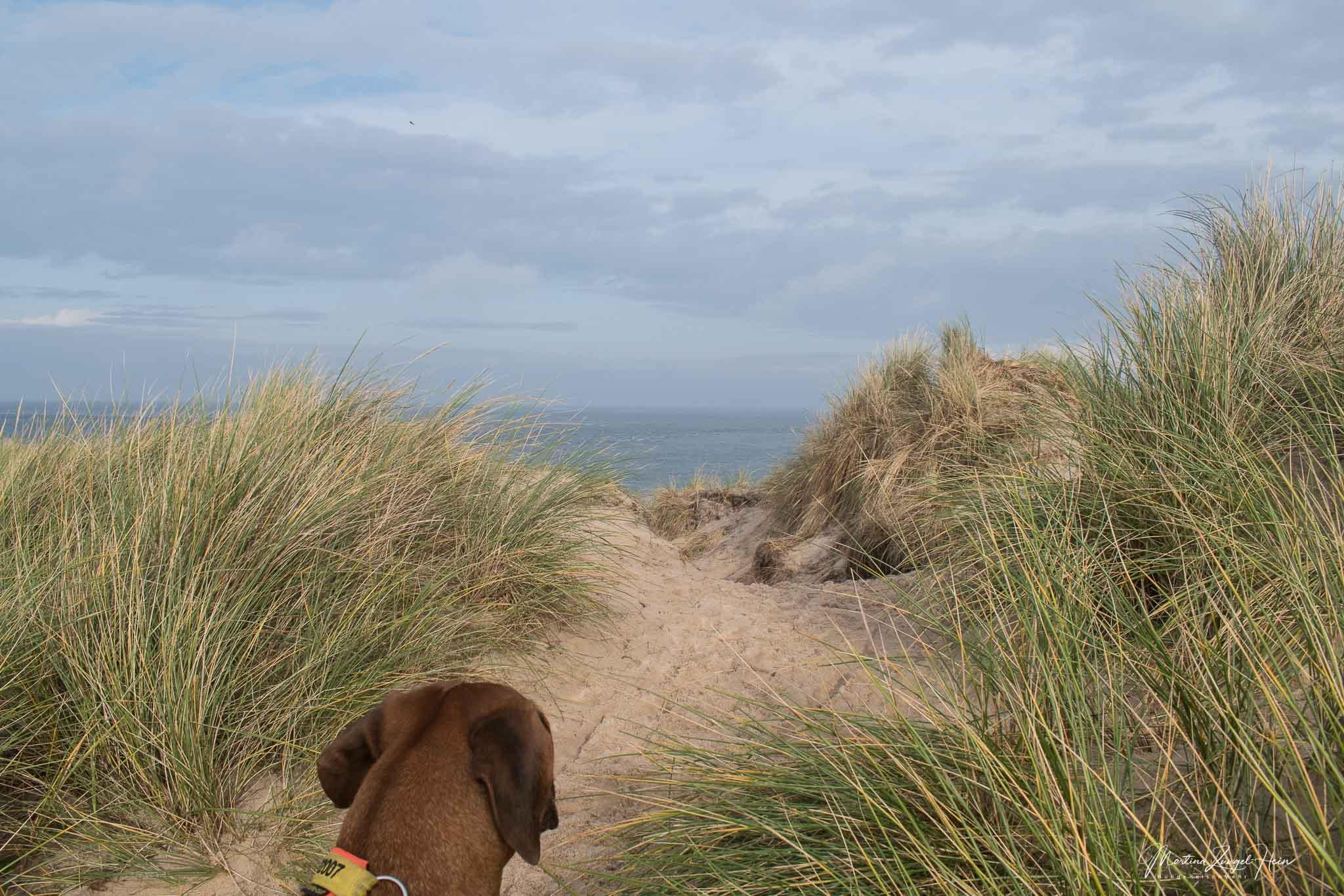 Sylt - 2 Tipps zum Wandern mit Hund