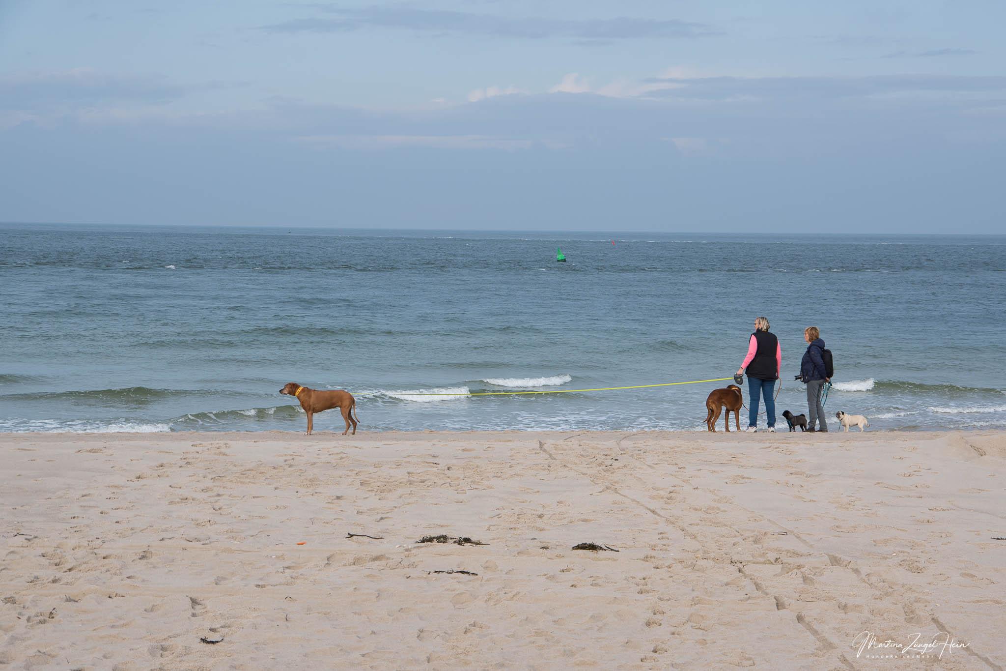 Morsum Kliff und Lister Ellenbogen mit Hund