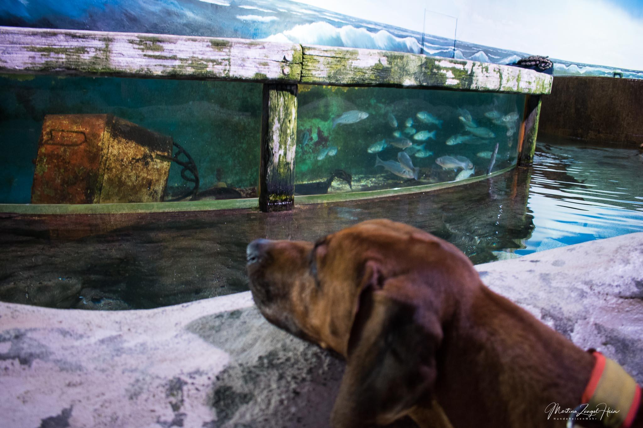 Dayo hat interessiert die Meeresbewohner betrachtet