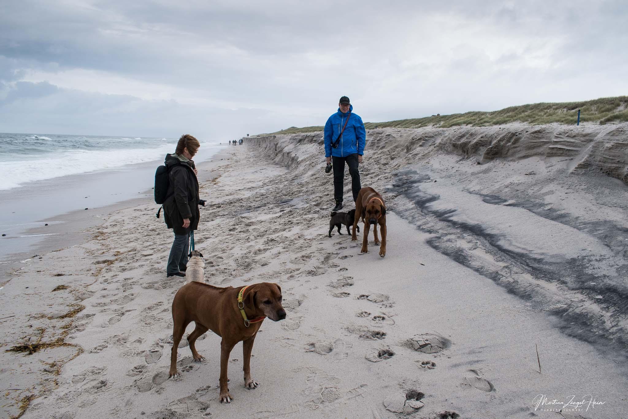 Sylt4Dogs - Hundestrände auf Sylt
