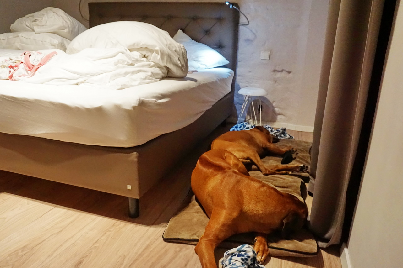 Urlaub mit Hund in einem Naturhäuschen