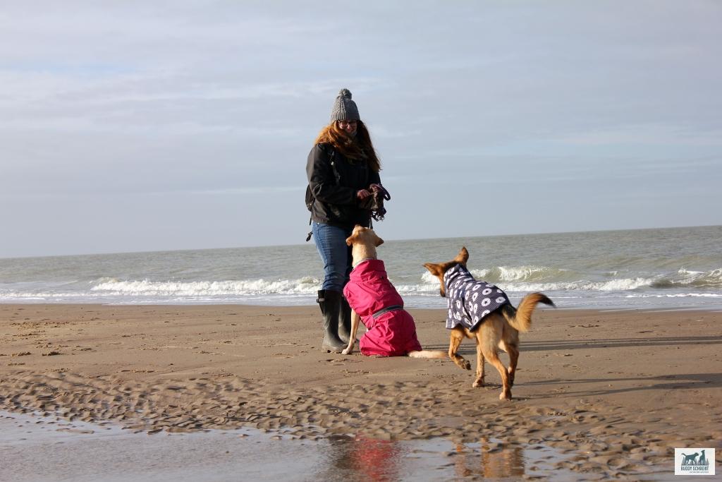 Kerstin mit Buddy und Amber