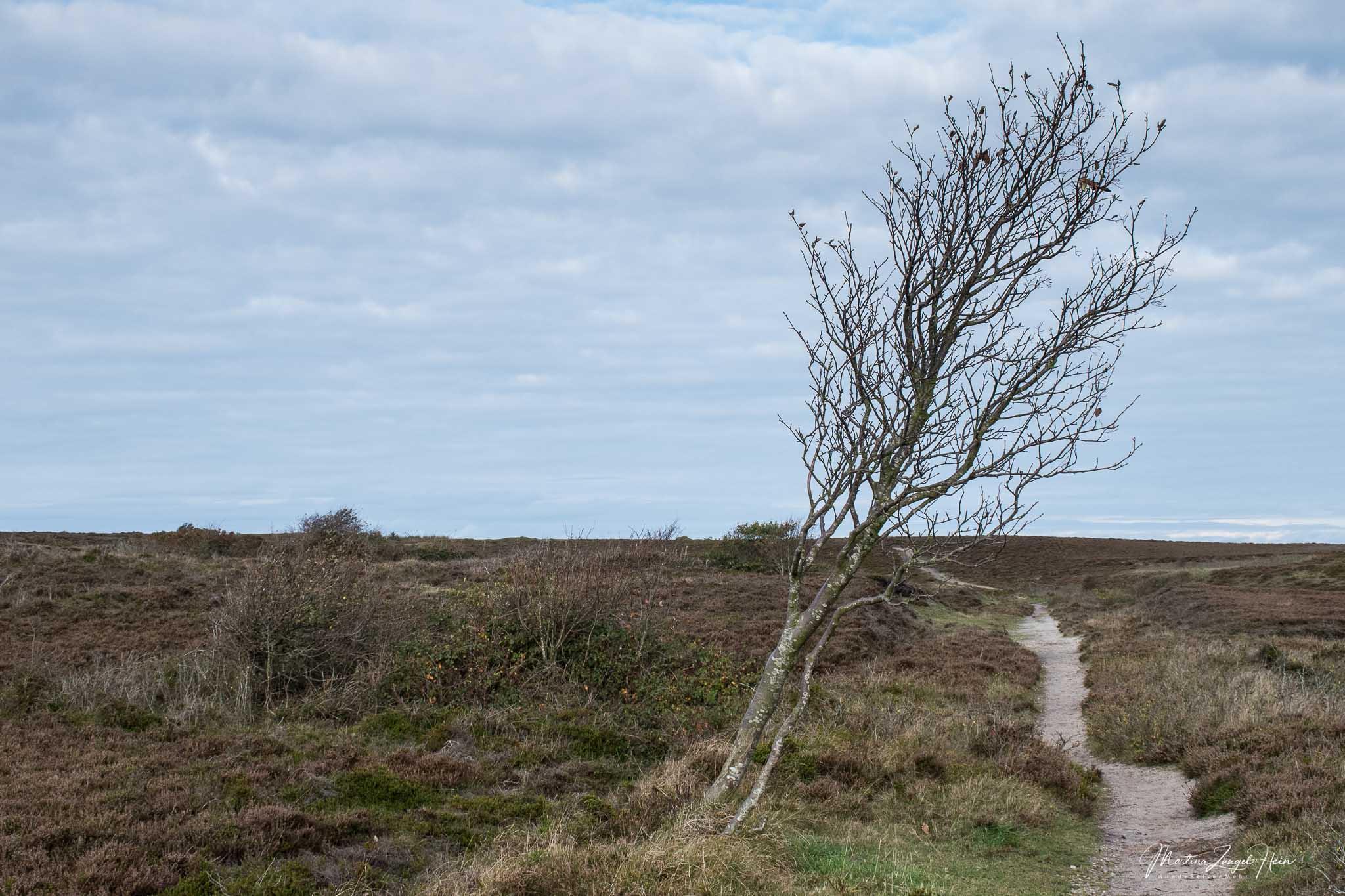 Karge Heidelandschaft und windschiefe Bäume zeugen von einer stürmischen Natur