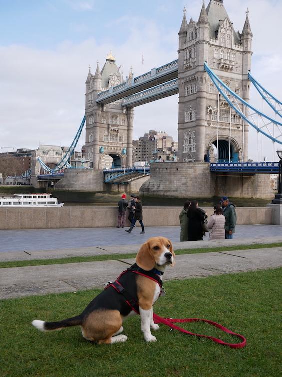 Piet an der berühmten Londoner Tower Bridge