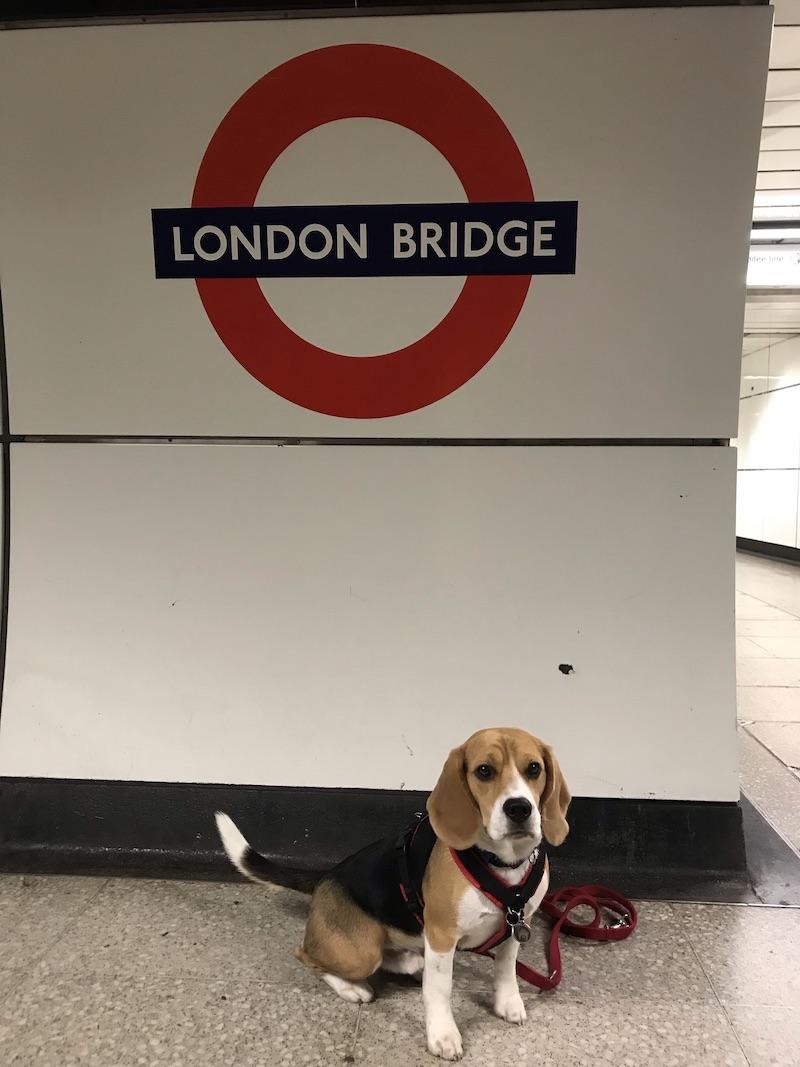 Hunde fahren in Zügen und U-Bahnen in London kostenlos mit