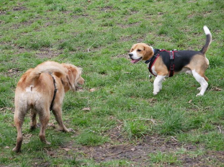 Im Green Park hat Piet auch neue Freund gefunden