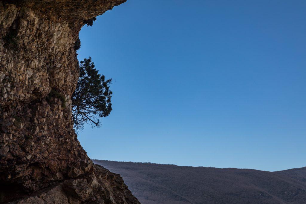 Hier wächst ein Baum aus dem Felsen