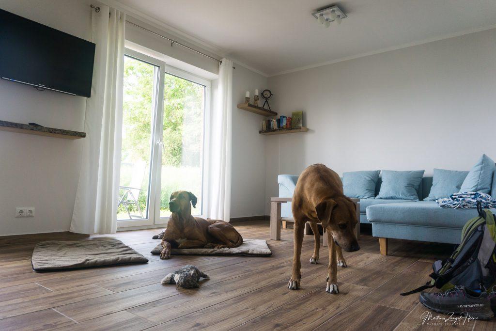 Ausreichend Platz für zwei große Hunde