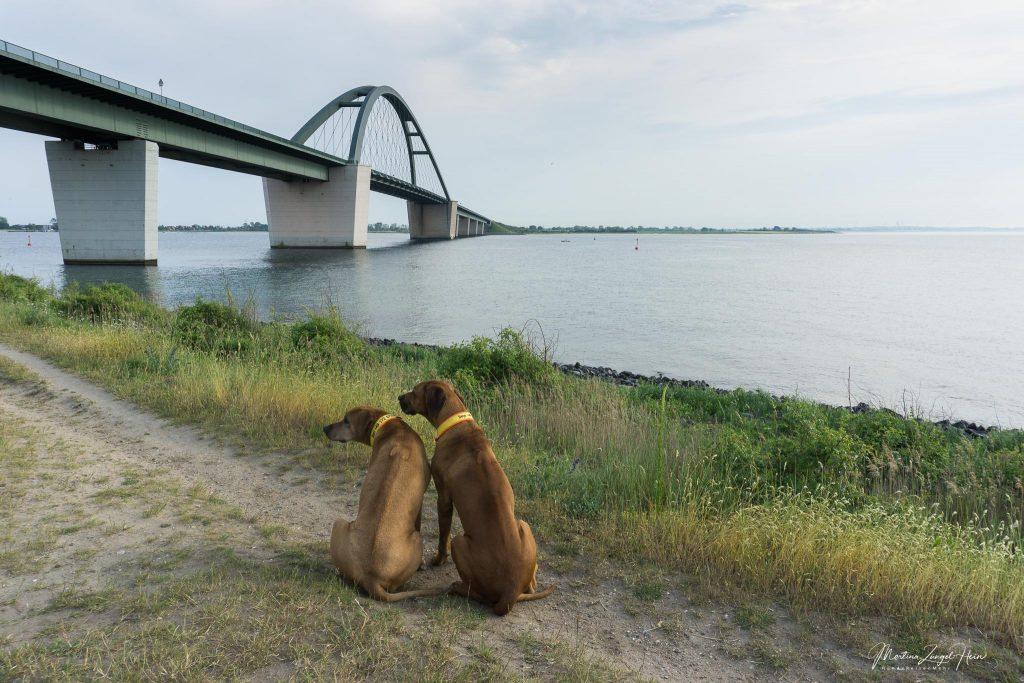 Dayo und Suri posieren vor der Brücke