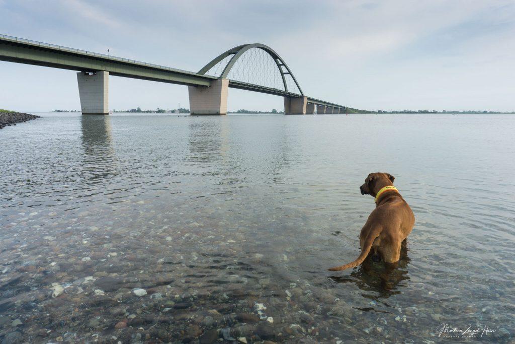 Dayo wagt sich in die Ostsee ...