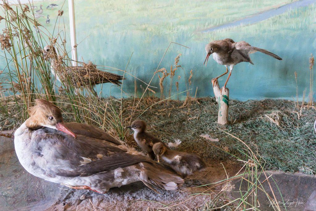 Lebensechte Vogel-Nachbildungen