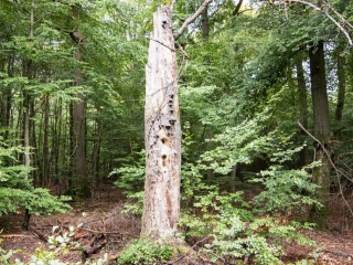 Abgestorbene Bäume mit Pilzbewuchs