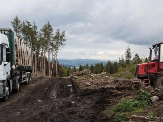 Das Holz wird mit schwerem Gerät abgefahren