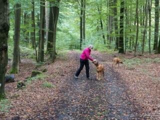 Dayo ist auch im Wald immer sehr brav