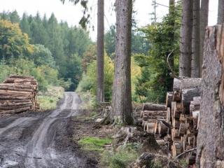 Der Westerwald hat stark und Borkenkäfer und Dürre gelitten