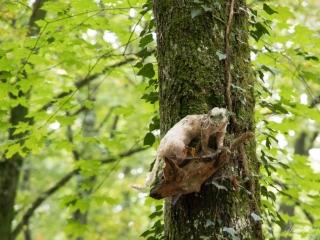 So manches Geschöpf versteckt sich in den Bäumen