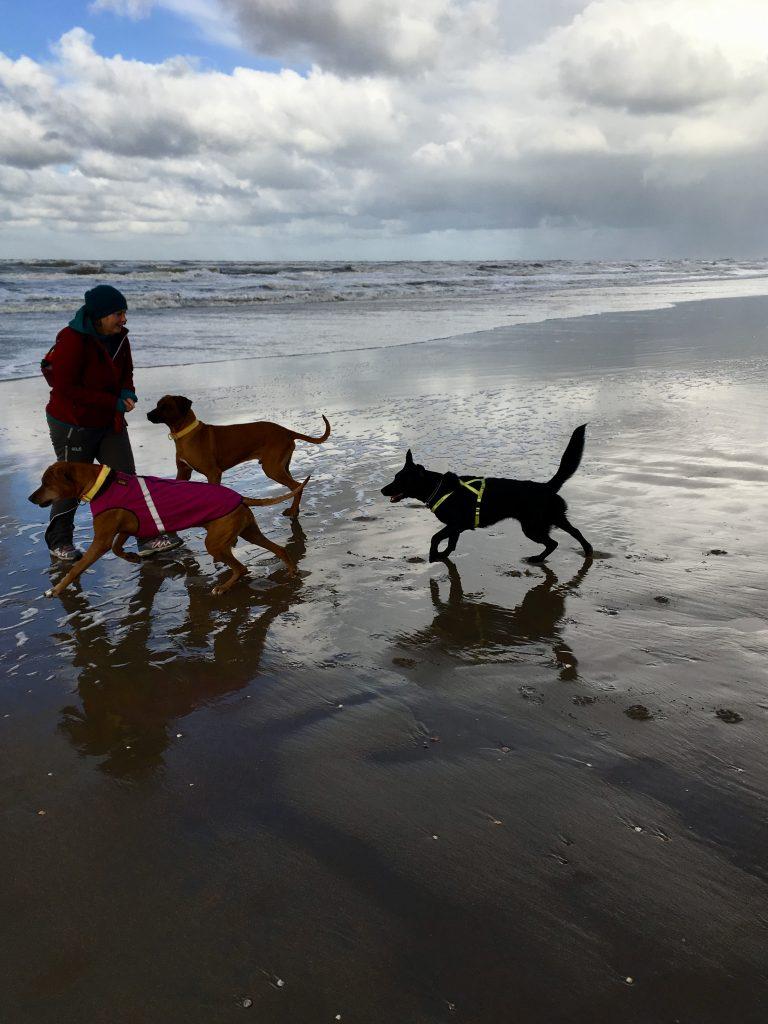 Die Hundefängerin von Noordwijk