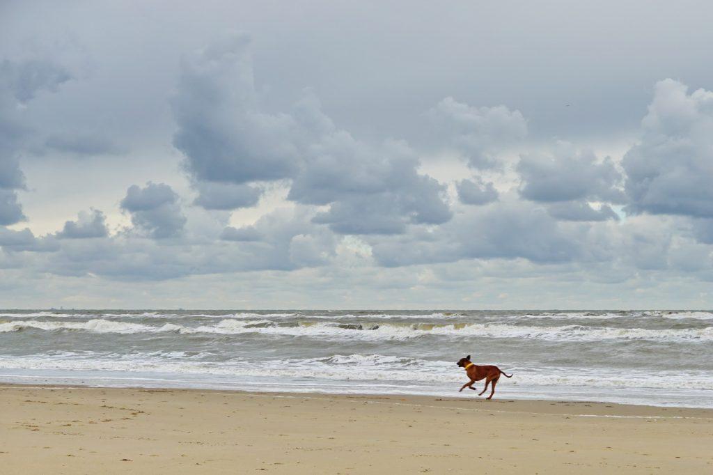 Dayo genießt den Strand