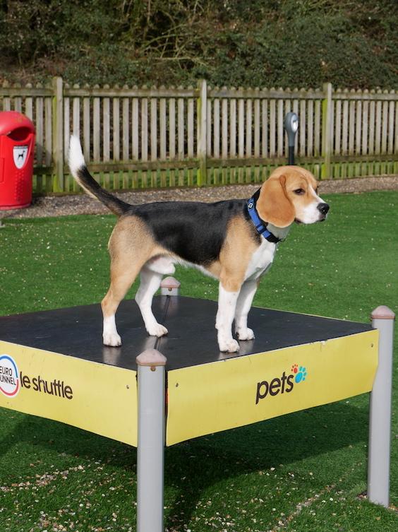 Auf den Pet Exercise Areas können sich die Vierbeiner austoben