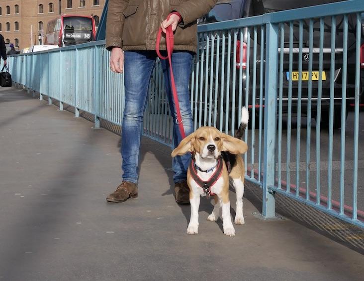 Ganz schön windig auf der Tower Bridge