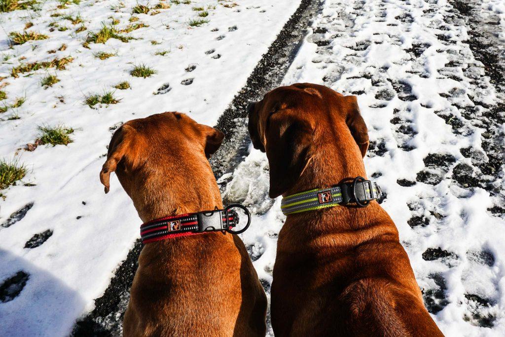 Dayo und Suri tragen Größe L
