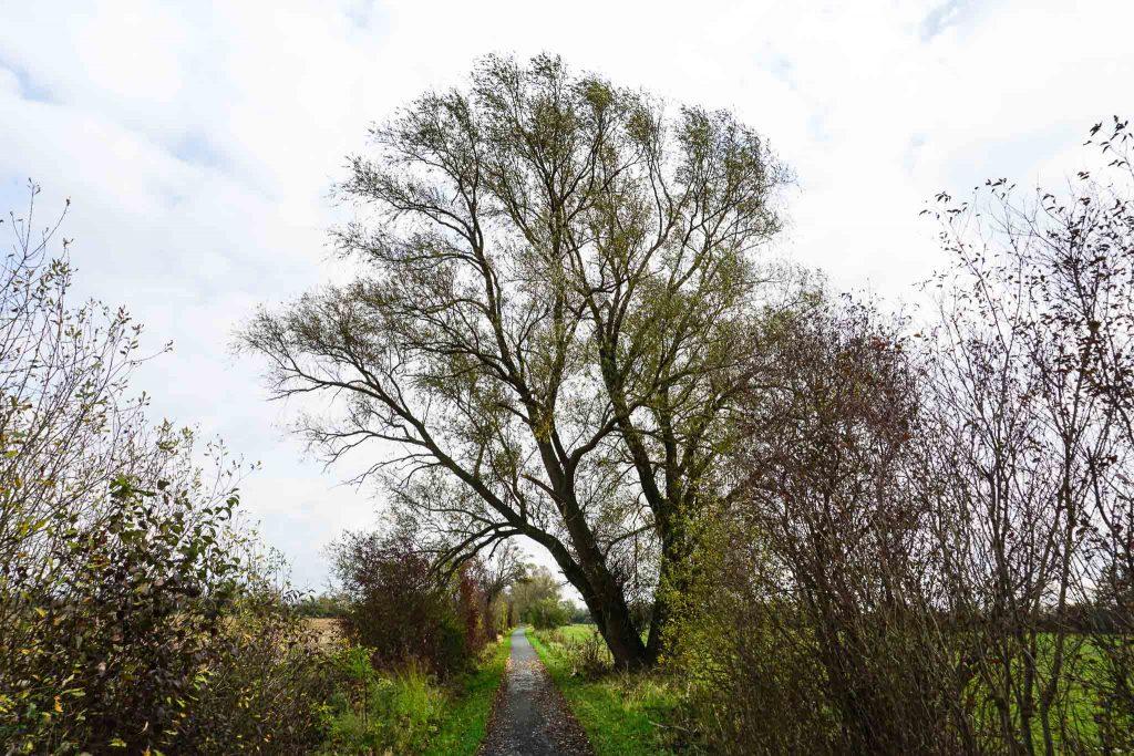 Rund um Ribbeck könnt ihr wunderbar spazieren gehen