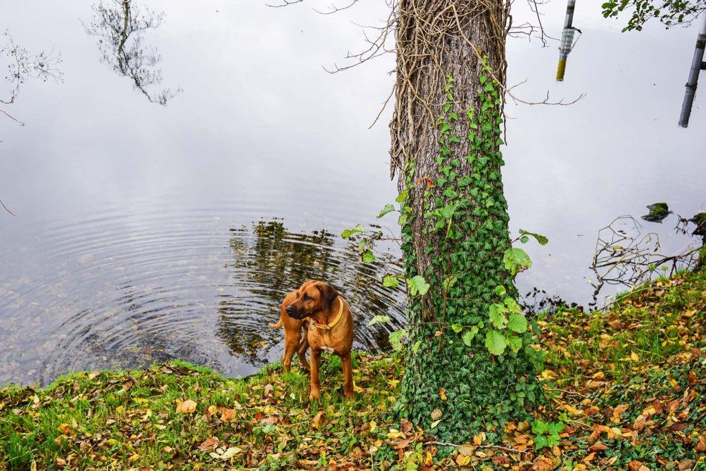 Dayo erfrischt sich am Wasser