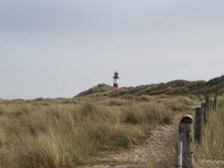 Sylt-2019-Lister-Ellenbogen-TH-Spaziergang-durch-die-Duenen-mit-Leuchtturm