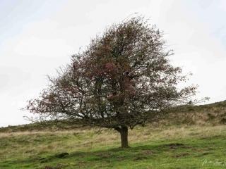 Der Baum hat sich der Hauptwindrichtung angepasst
