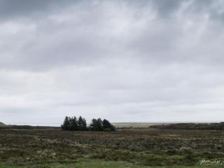Die karge Heidelandschaft trotzt dem rauen Wetter