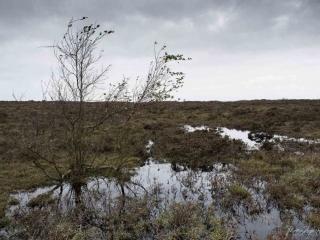 Karge Natur mit Hochmoor-Charakter
