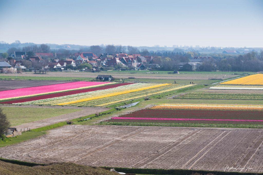 ... auf Den Hoorn und die Tulpenfelder ...