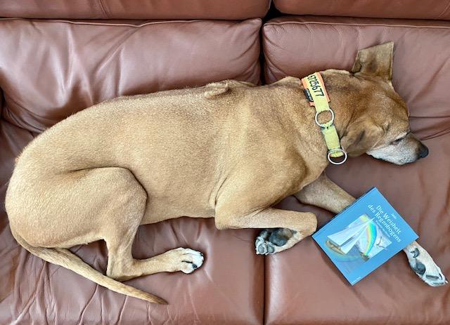 Suri interessiert sich nicht so besonders fürs Lesen