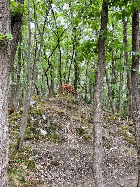 Raban war auch kurz vor Ende der Wanderung noch fit genug, um die Gegend zu erkunden.