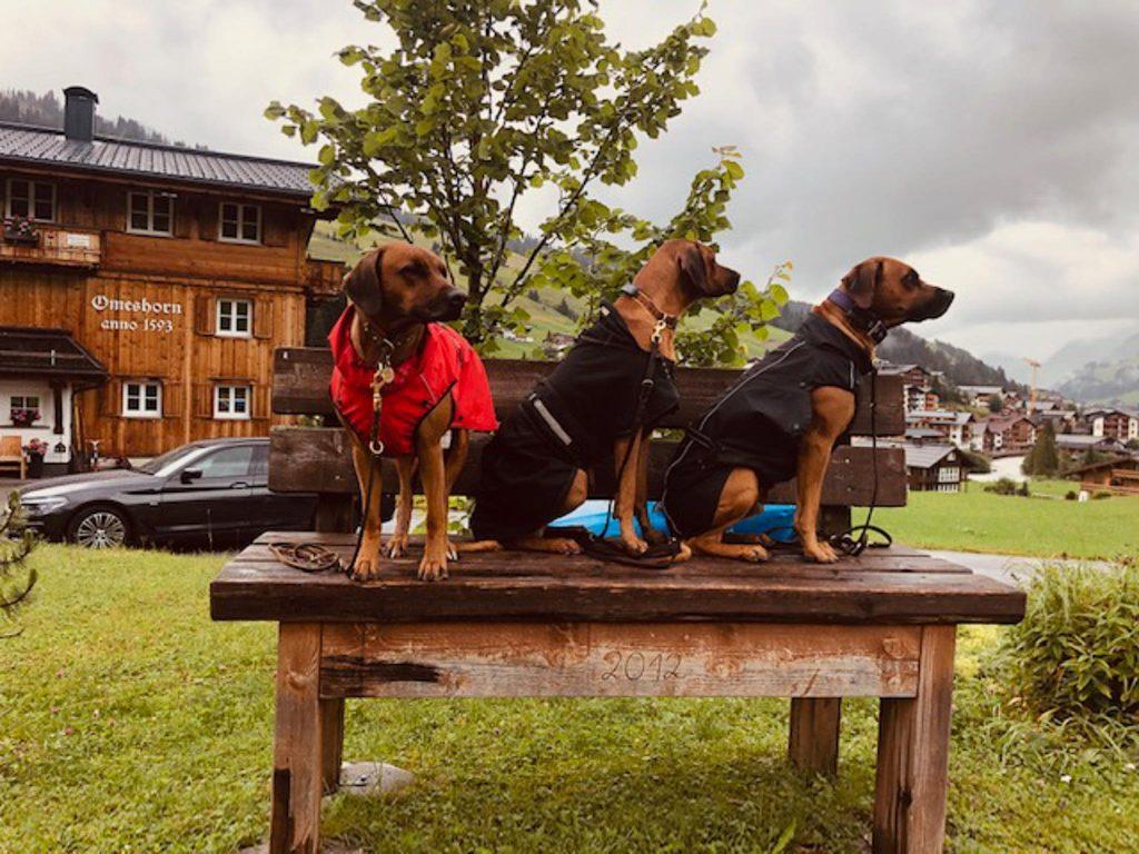 Lechweg - Wildflusswanderung mit Hund