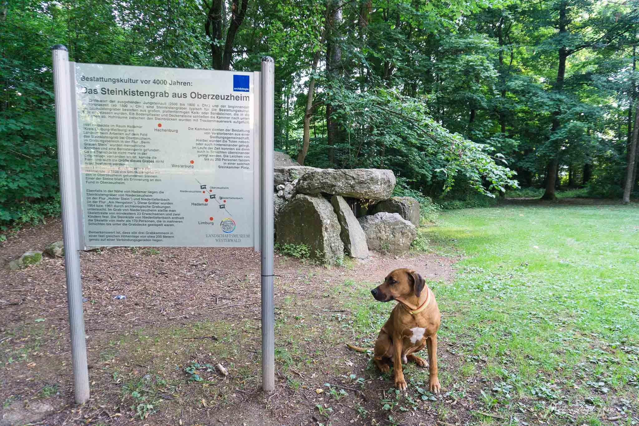 Dayo interessiert sich nicht besonders für das Steinkistengrab aus Oberzeuzheim