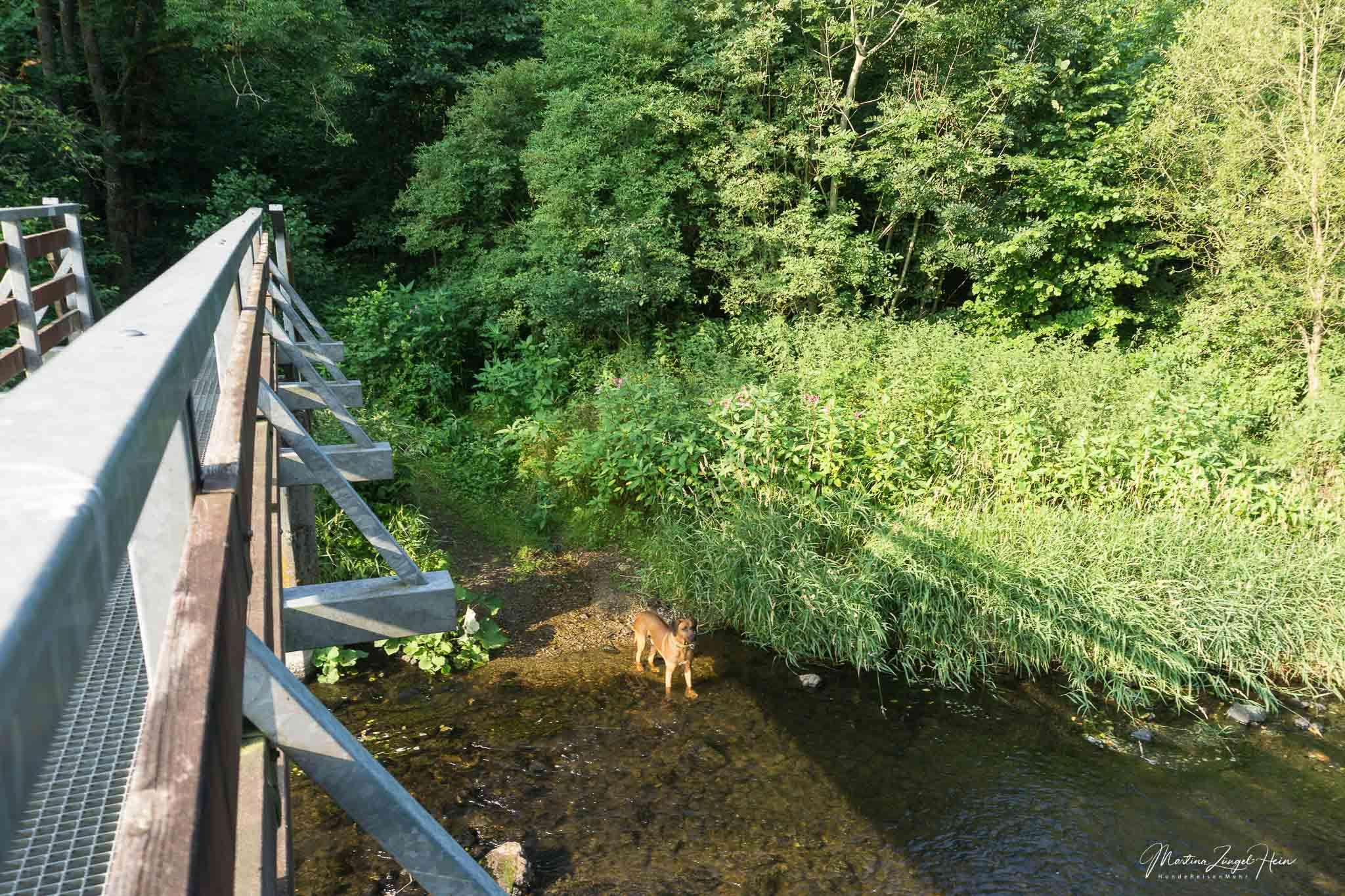 Dayo zieht es vor, durchs Wasser zu spazieren und nicht die Brücke zu nehmen
