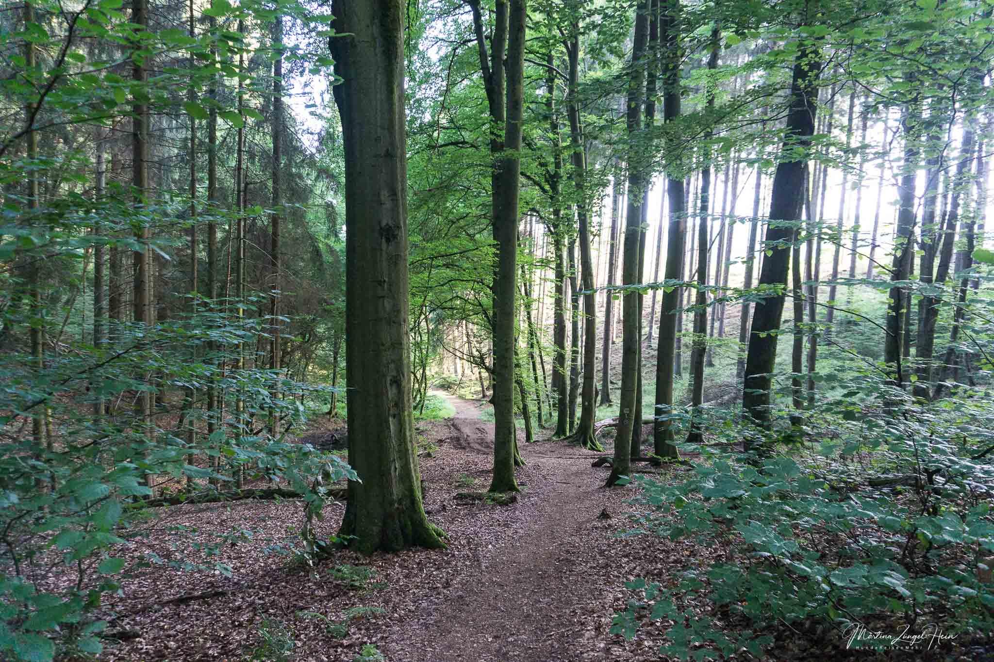 Durch den Wald geht es bergab in Richtung Wasser