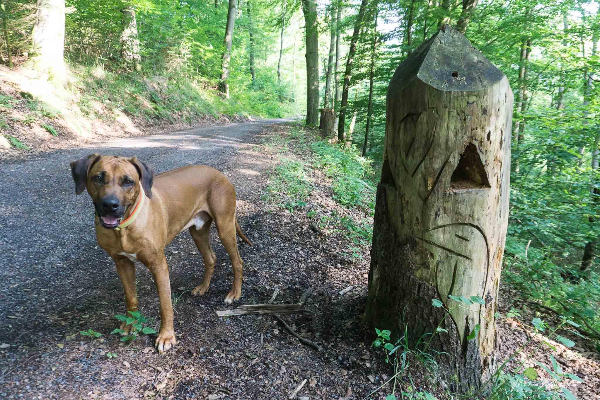 Kurz vor dem Kloster verläuft der WesterwaldSteig auf einem gut ausgebauten Wirtschaftsweg