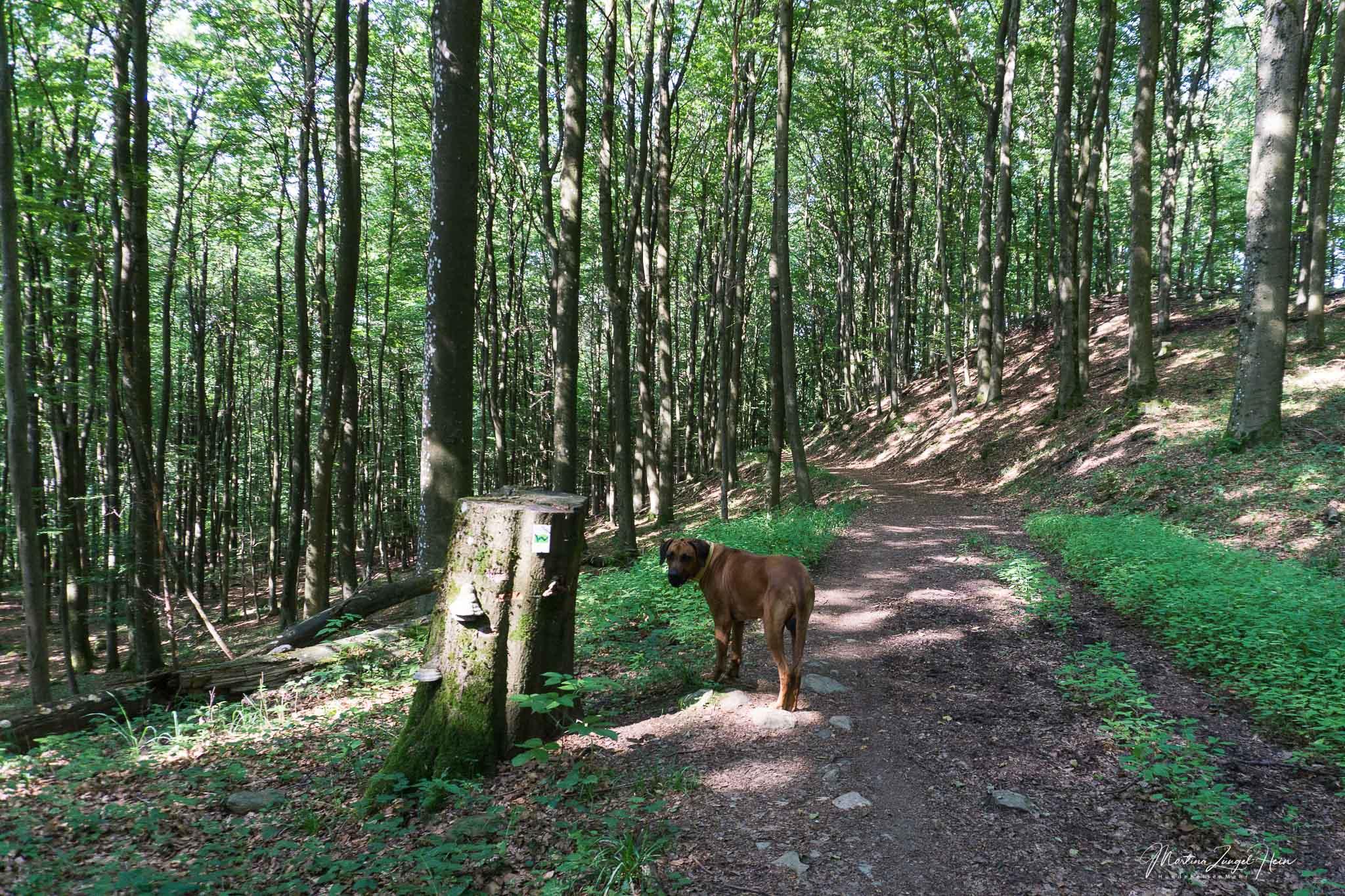 Die 16 Etappen des WesterwaldSteigs sind tolle und manchmal auch anstrengende Ausflugsziele im Westerwald
