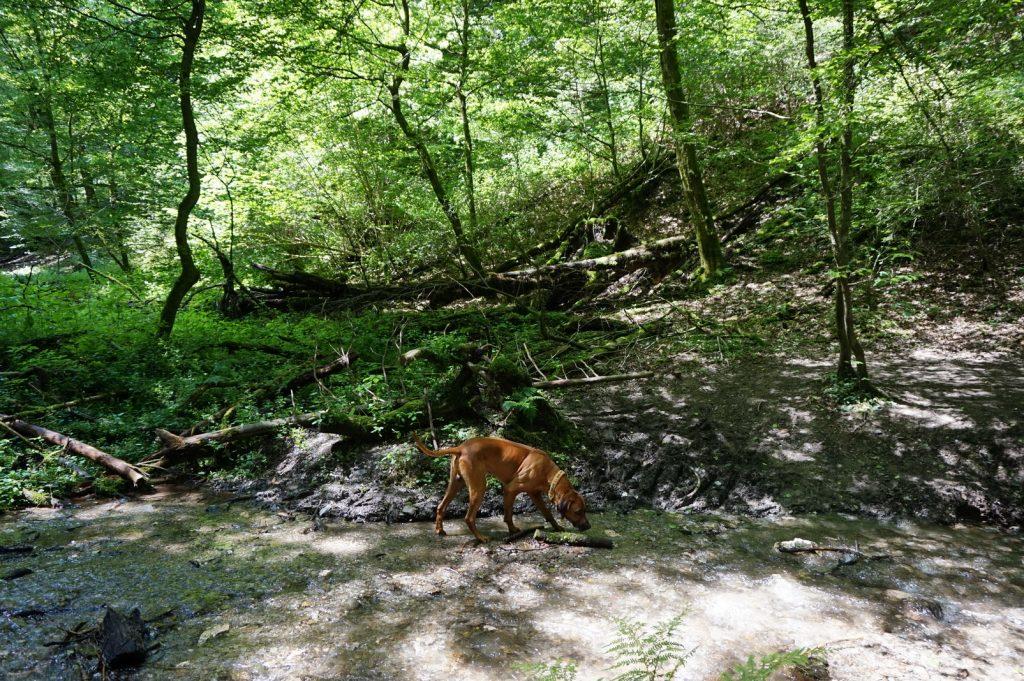 Abenteuer Geierlay mit Hund