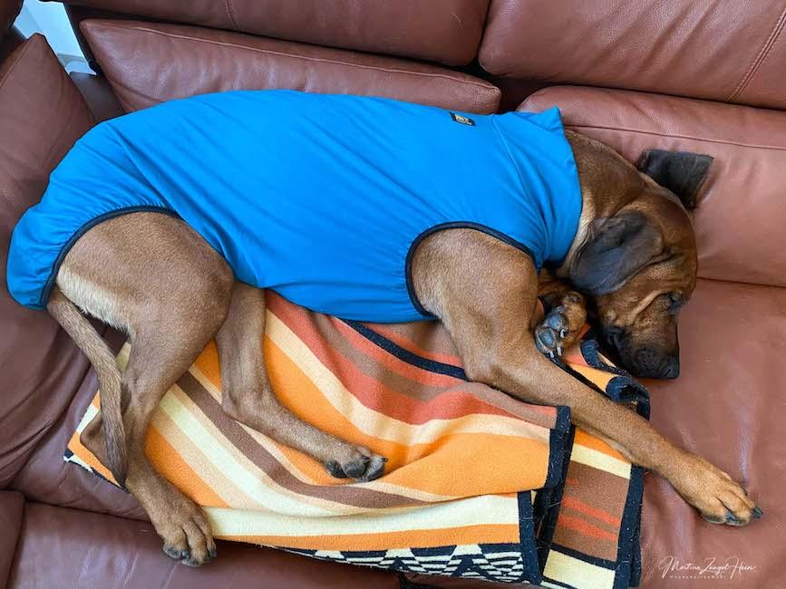 Raban hat dann aber trotz Pulli tief und fest geschlafen.