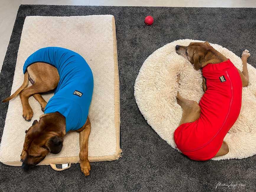 Der neue Hundepullover Sweat für mollige Kuscheleien zu Hause