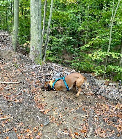 Raban hat richtig Spass im Wald