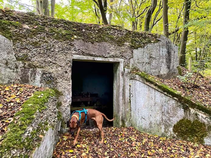 Raban erkundet ein altes Wasserwerk mitten im Wald