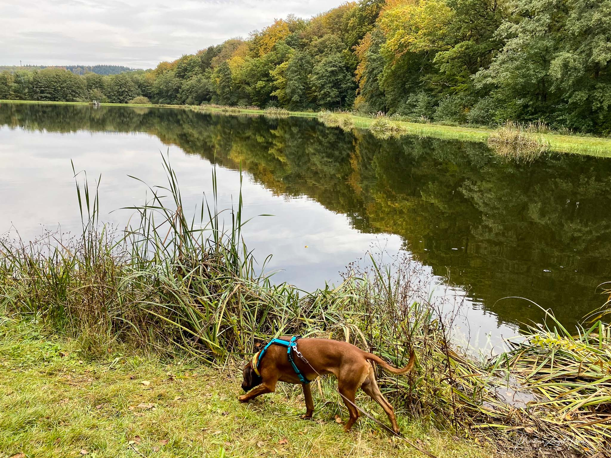 Wäller Tour Elberthöhen - Raban erkundet neugierig das Ufer am Fischteich